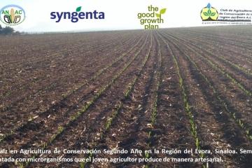 Agricultura Sustentable desde la mirada de los pequeños agricultores en México, el maíz un gran actor.